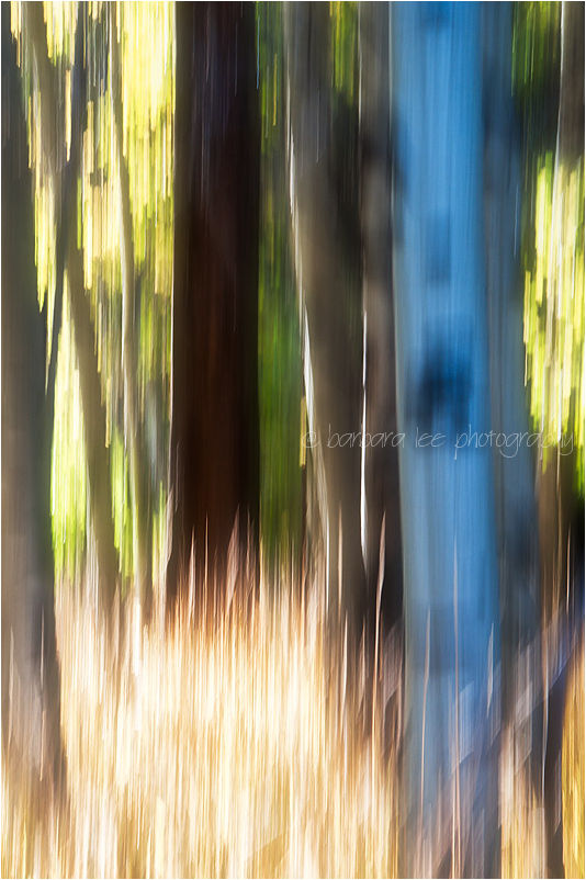 Painting with Light - Sierra Aspens