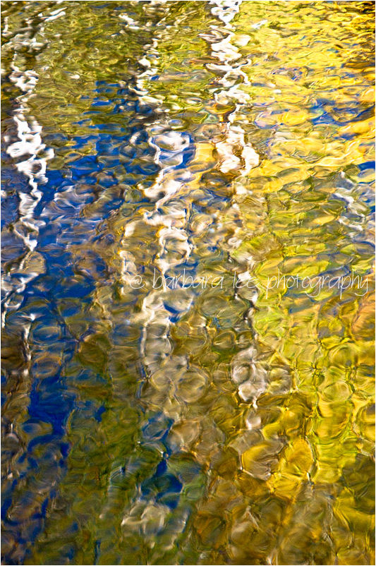 Aspen Refections in the Carson River