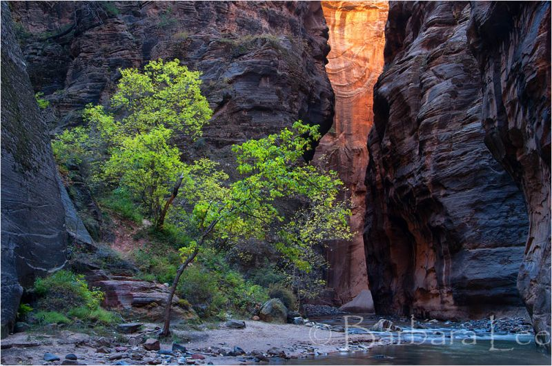 In the Zion Narrows
