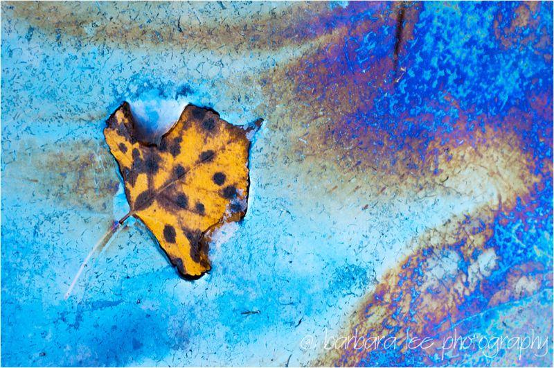 Zion Iridescent Leaf