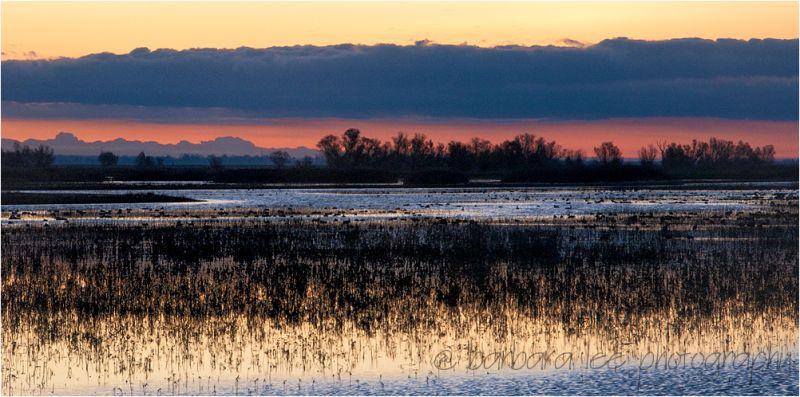 Winter Marsh in the Colusa Wildlife Refuge