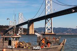 Herring Fishing in San Francisco Bay