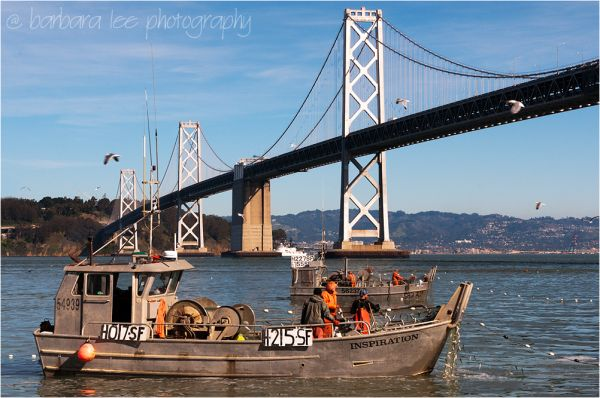 Herring Fishing in San Francisco Bay