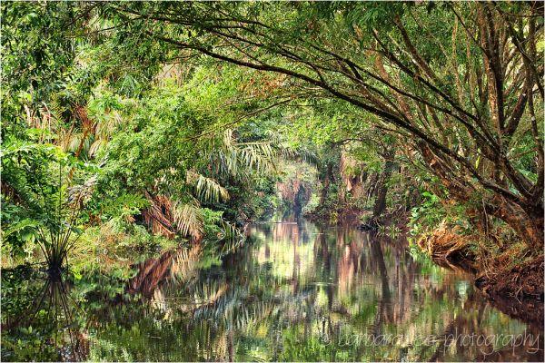 Canal in Tortuguero Costa Rica