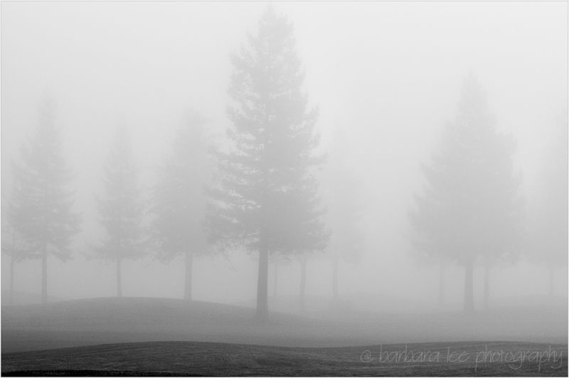 Foggy Trees on Golfcourse