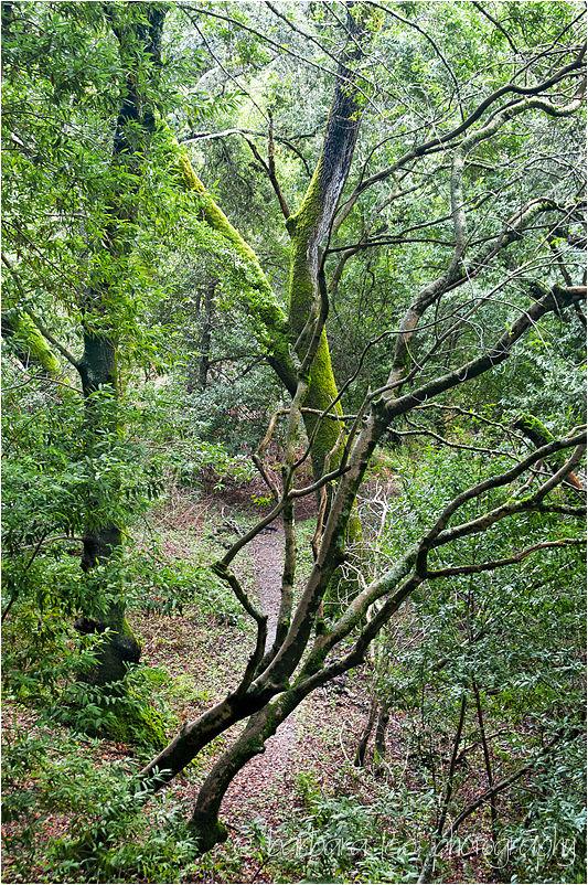 Green Trees in Briones Regional Park