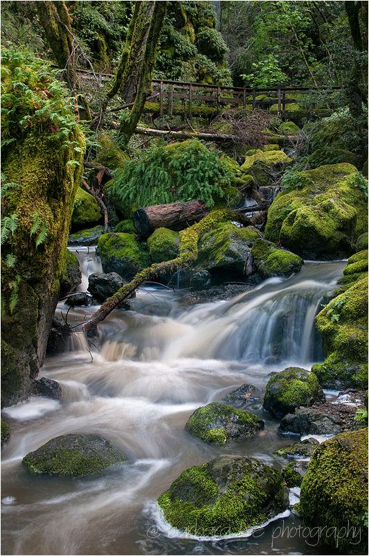 Cataract Falls, Mt. Tamalpais State Park