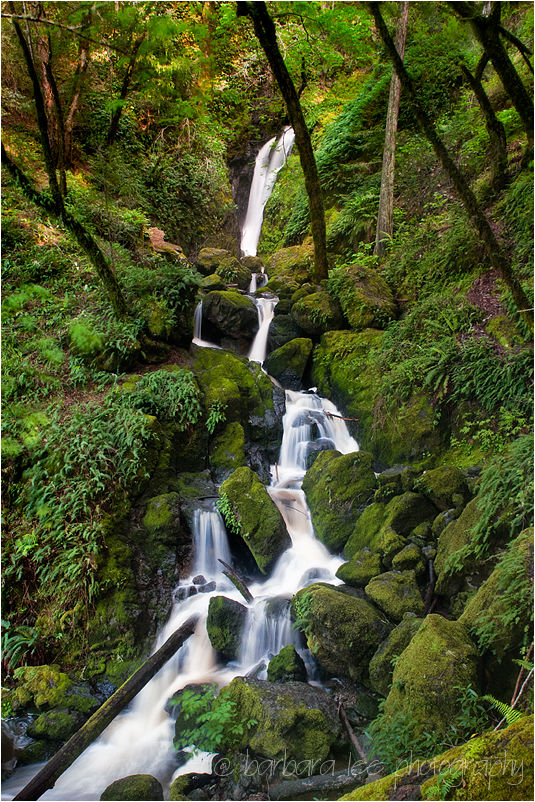 Cataract Falls on Mt. Tamalpais in Marin County