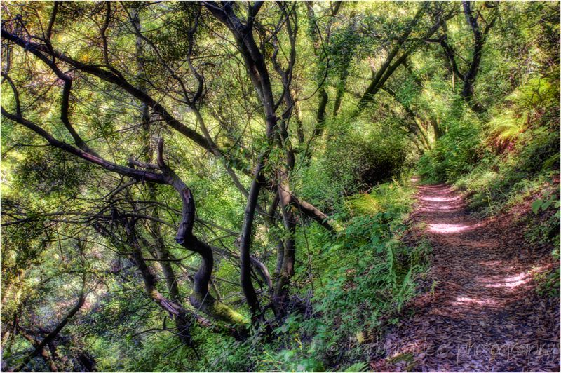 Huckleberry Trail HDR