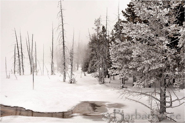 Yellowstone Winter Scene