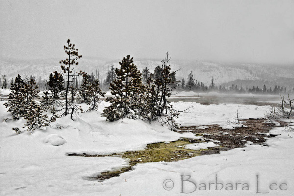 Yellowstone winter landscape