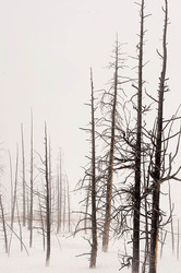 Yellowstone winter landscape with trees