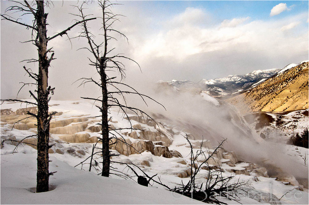 Yellowstone winter at Mammoth Hotsprings