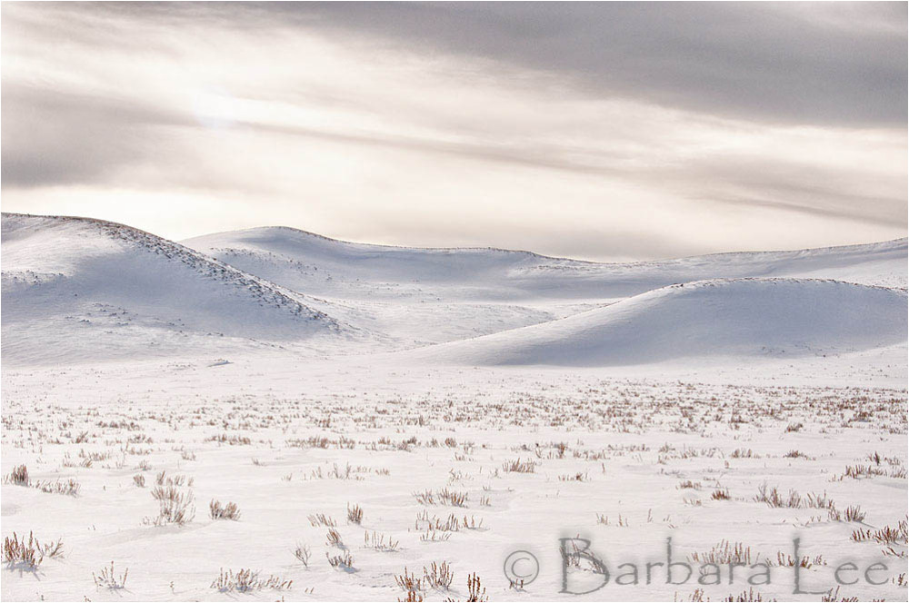 Yellowstone Winter Landscape