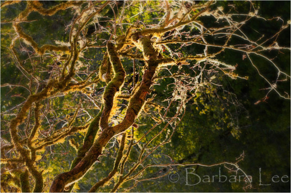 Backlit Tree Branches on late afternoon