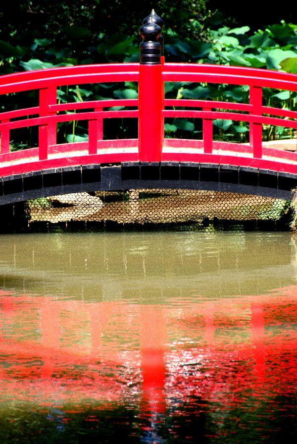 Bridge at the janpanese garden