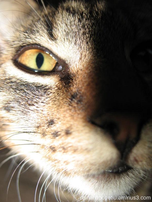 Ochi de pisica...