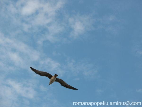 Un pescarus in zbor