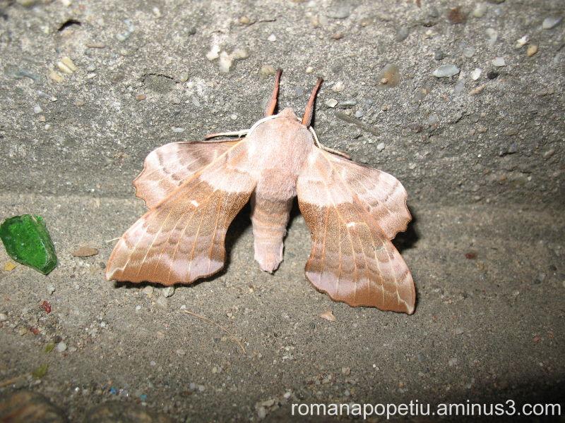 Un fluture...