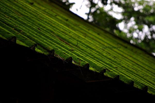 Live green...