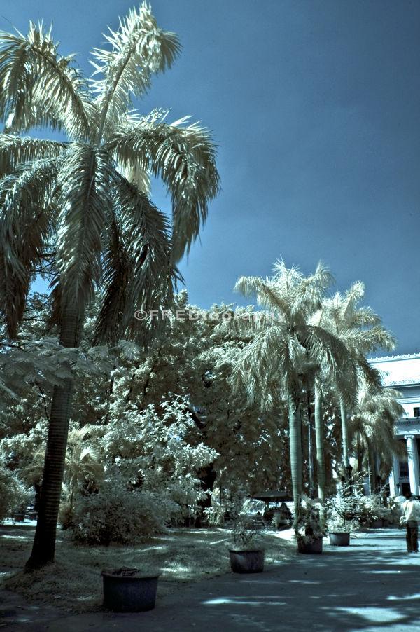 White foliage