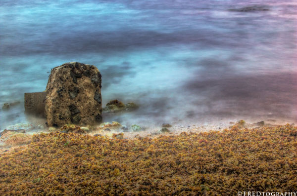 A rock and sea weeds in Potipot.