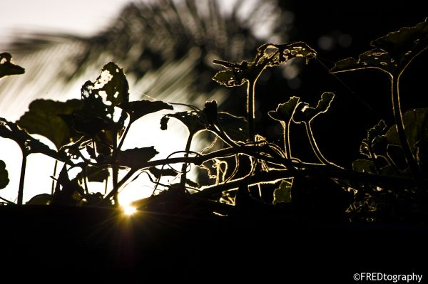 A plant silhouetted by the setting sun.