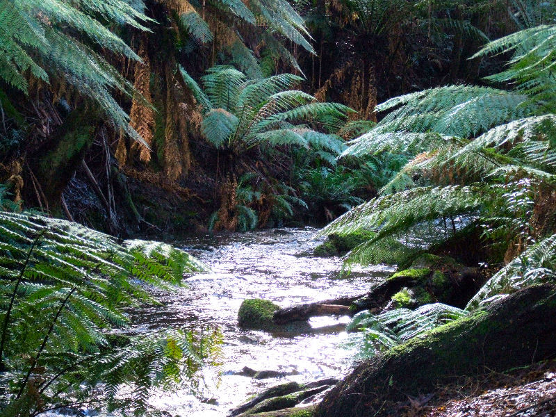 Beech Forest waterfall, in the Otway Ranges.