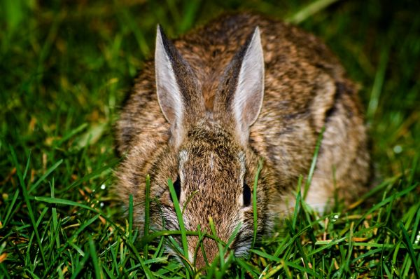 rabbit stare