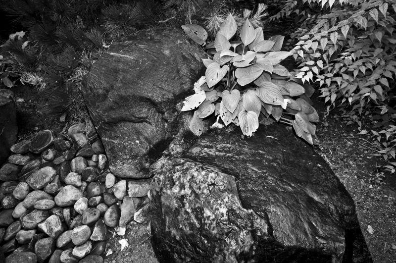Rocks and Shrubs