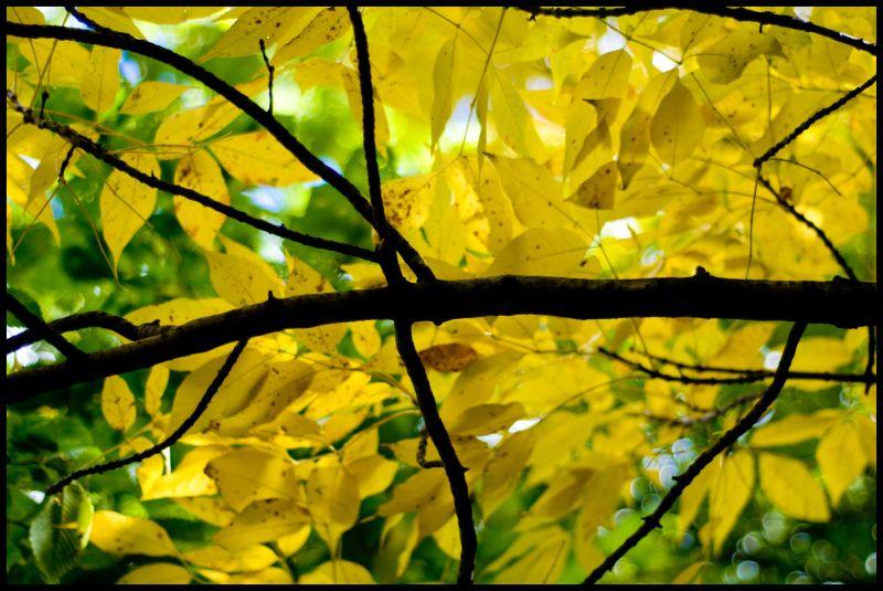 fall colour in kariya park