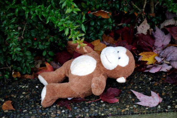 Abandonned Teddie Bear...