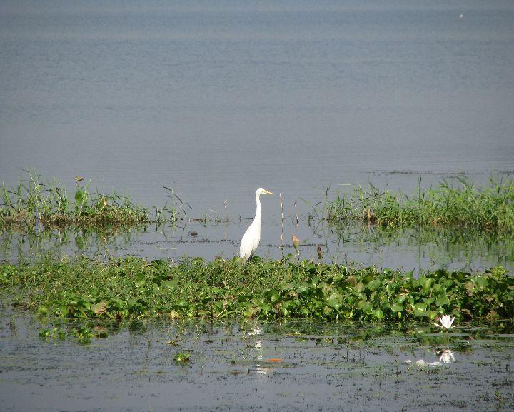 crane in a lake