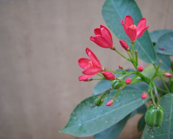 tiny red flowers