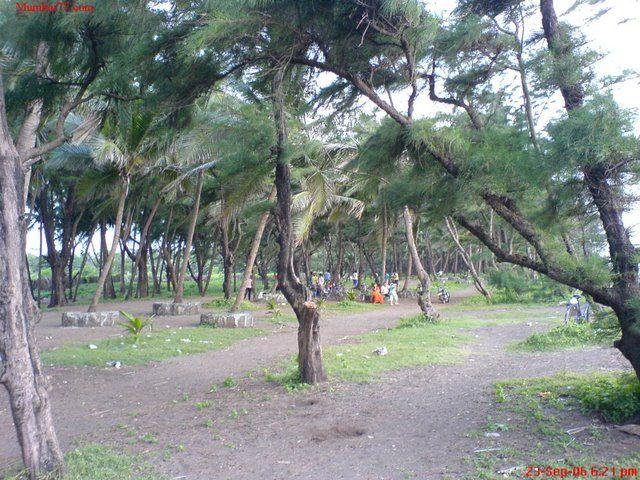 Arnala beach trees