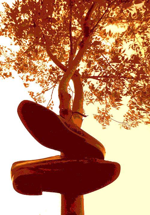 Un parell de sabates penjades d'un arbre