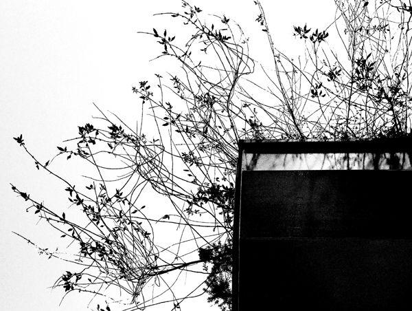 Una petita planta que penja