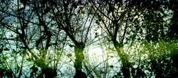 Escolteu els arbres observant el seu color