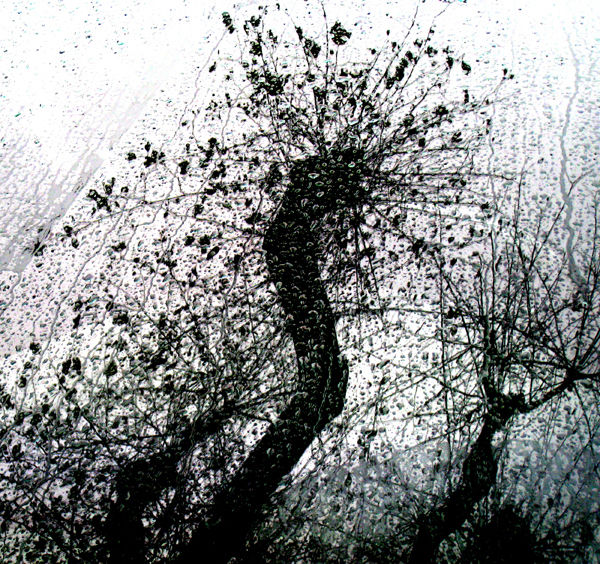 Diàleg entre un arbre i la pluja