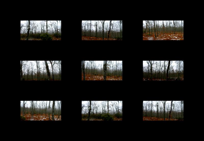 *  Árboles de la Sierra de Francia 1 (para Belén)