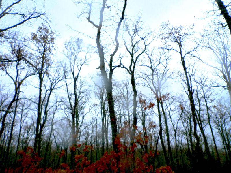 *  Árboles de la Sierra de Francia 2