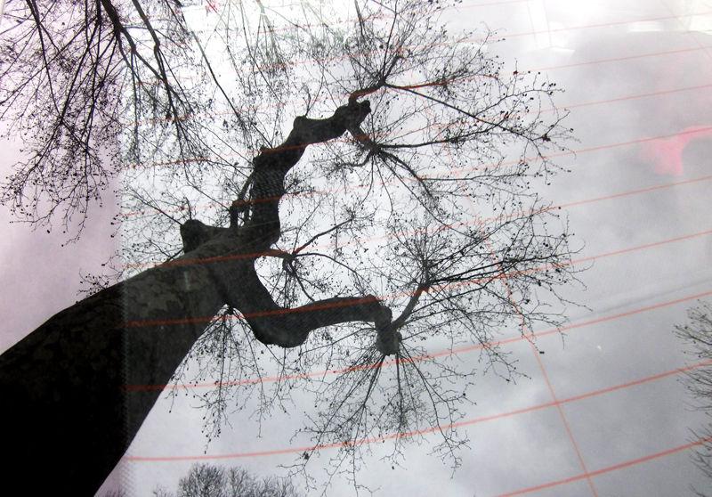 * Poda d'arbres  a la ciutat 1