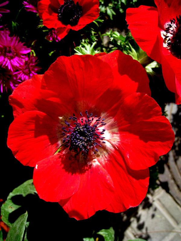 * La bellesa de les flors  1