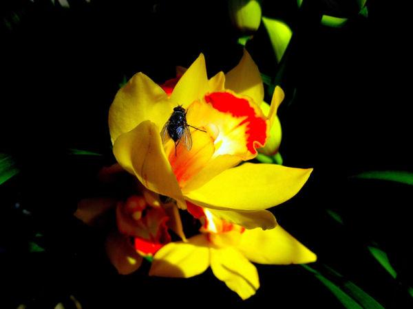 * La bellesa de les flors  3