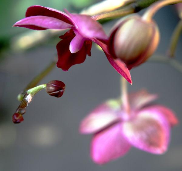 * La bellesa de les flors  5