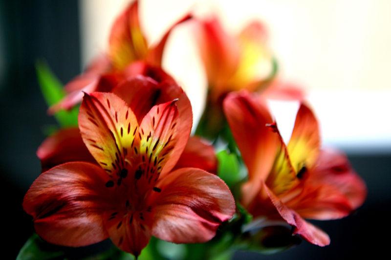 * La bellesa de les flors  6