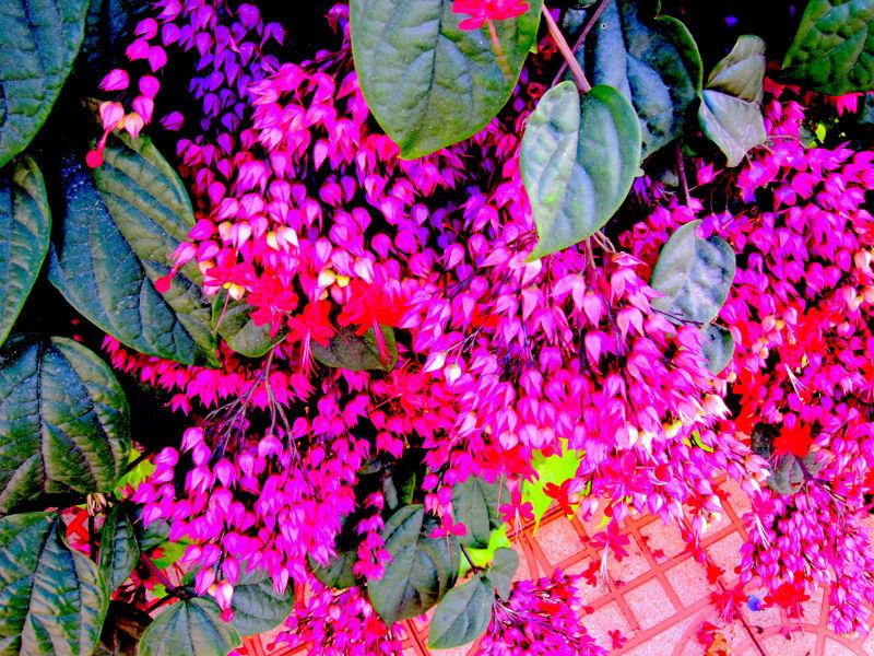 Flors flores flowers