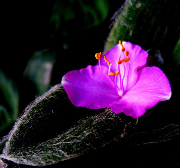 * Llums i colors d