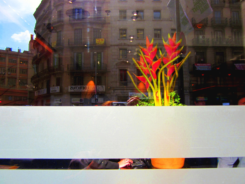 * Flors exòtiques