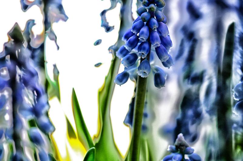 * Flors inefables 4